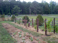 a productive fruit orchard, featuring natural cedar posts and over 15 varieties of food producing trees, shrubs and perennials