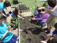 students gather around to put plants in the ground before summer break